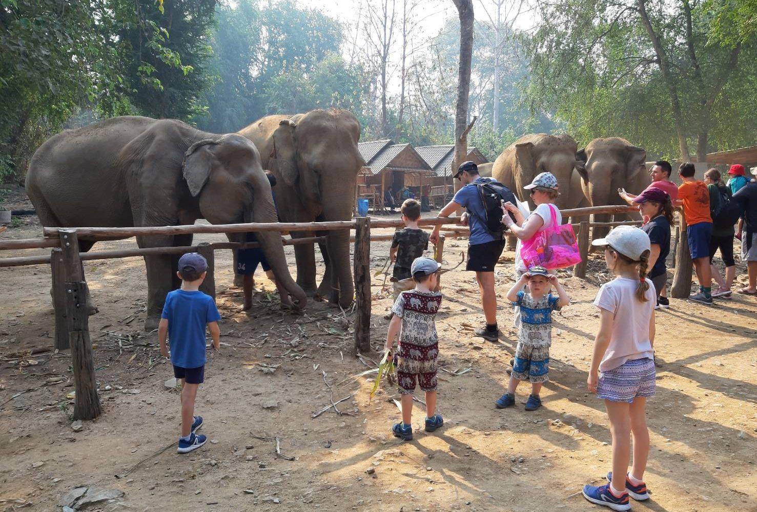 Elephant Haven Kanchanaburi